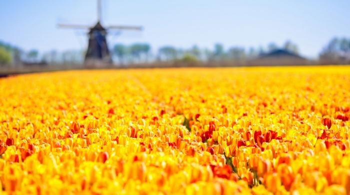 Интересно знать : В голландской провинции Флеволанд откроется огромный национальный парк